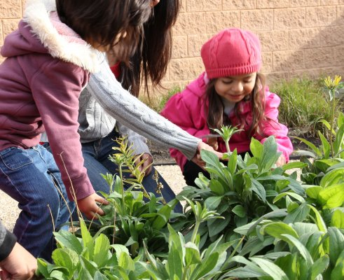 Families can now interact safely with the garden's native plants and insects.