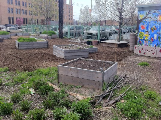 """<a href=""""http://www.facebook.com/pages/Pilsen-Alianza-Verde/117811451588843"""">La Alianza Verde</a>, a network of local gardeners, leads this effort. Every year, they organize a tour of gardens around the neighborhood, including Growing Station (pictured)."""