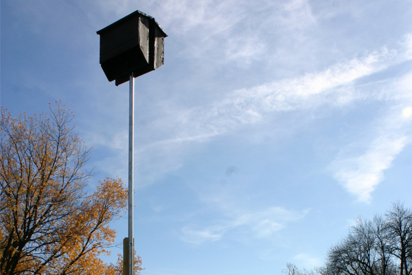 Boy Scouts installed 13 bat houses in natural areas across the community to attract more bats to the area and reduce the need for chemical pesticides.