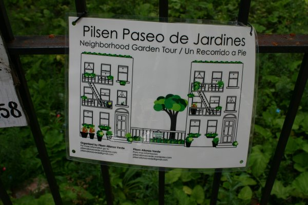 La Alianza Verde is leading an effort to plant milkweed in gardens across the community to turn Pilsen into a Monarch sanctuary. Like many of the Michoacanos who live in Pilsen, Monarchs migrate between Mexico and Chicago and make their homes in both places.